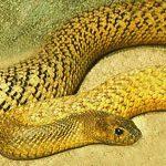 Maailma kõige ohtlikumad maod