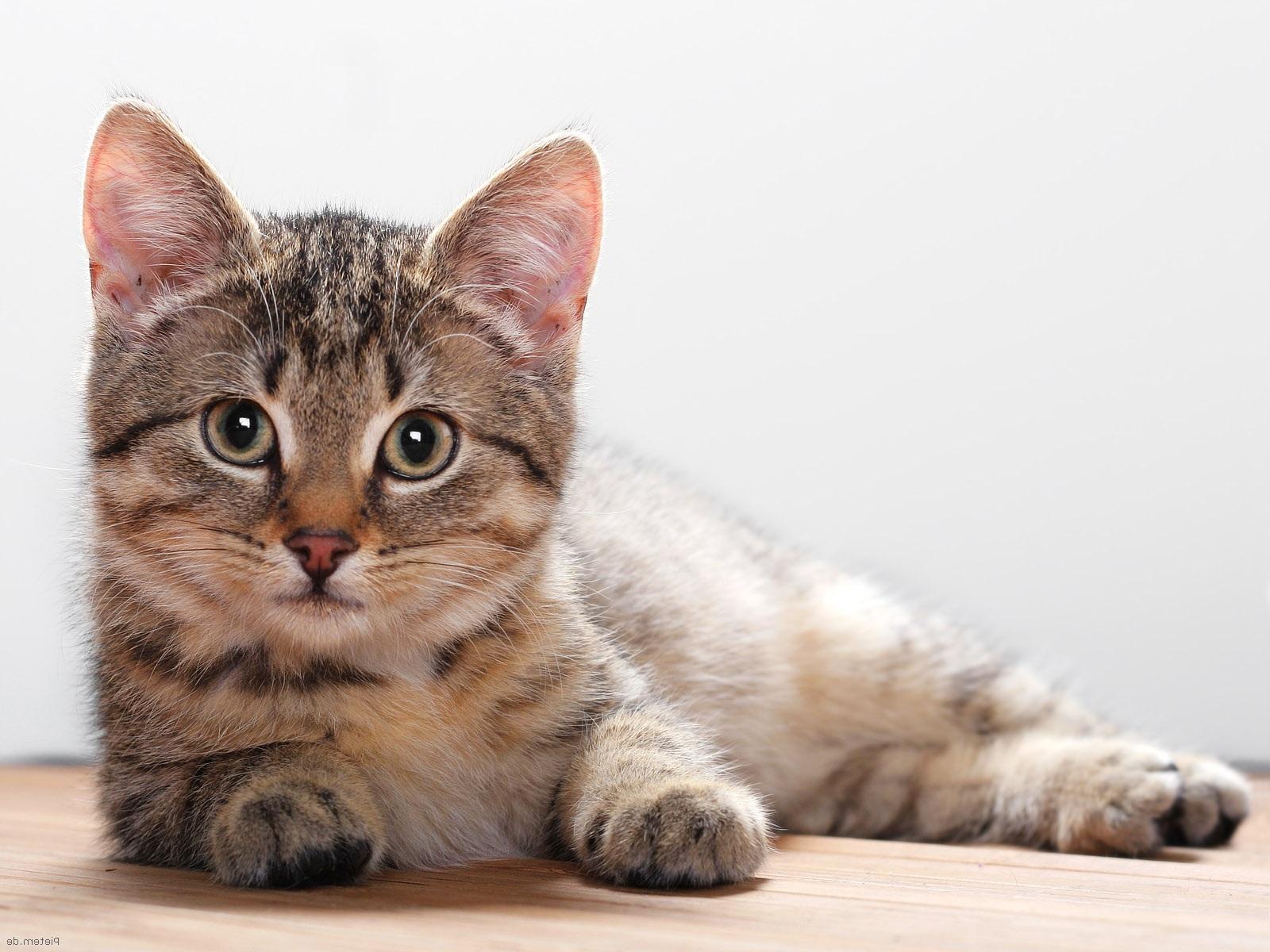 Taustapilt kassist