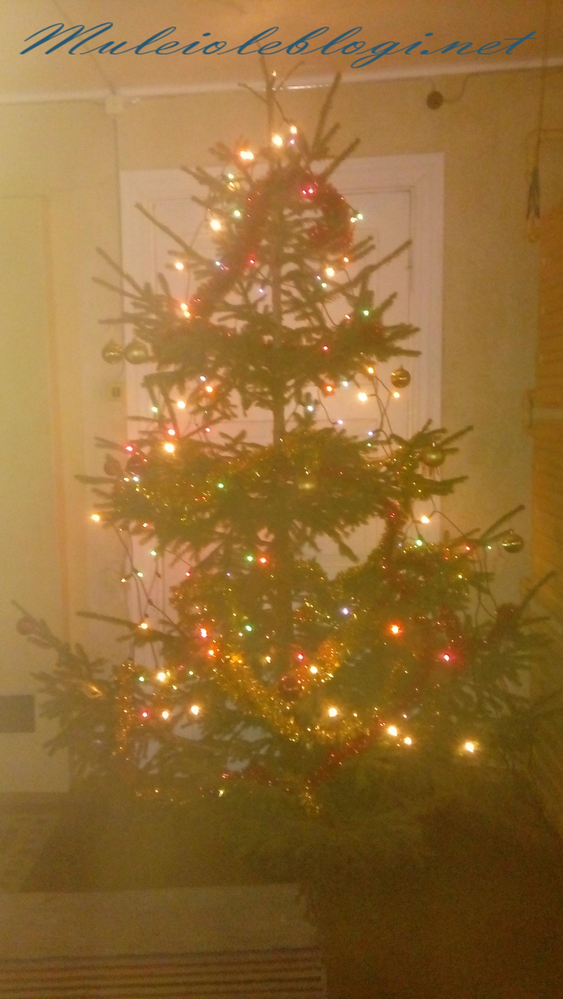 Oh kuusepuu, oh kuusepuu…